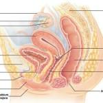 Диссертации по акушерству и гинекологии