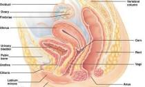 диссертация акушерство и гинекология